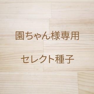 園ちゃん様専用 セレクト種子4袋(野菜)