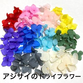 【10色】アジサイのドライフラワー(ドライフラワー)