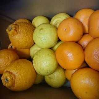 熊本県産柑橘詰め合わせ(フルーツ)