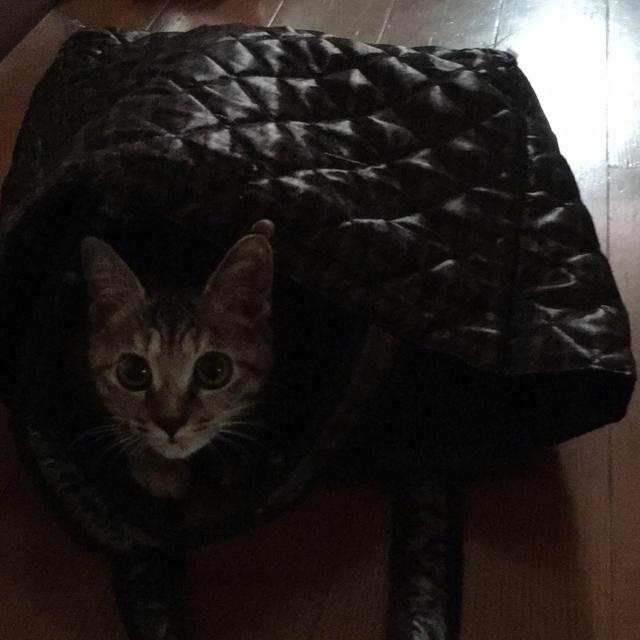 フロントラインプラス猫用 その他のペット用品(猫)の商品写真