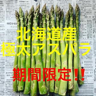 北海道産グリーンアスパラガス1キロ 太め〜極太サイズ(野菜)