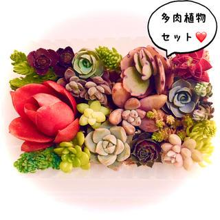 *専用出品*多肉植物&セダム❣️カット苗セット(その他)