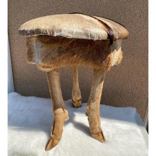 グリモワール(Grimoire)の剥製 椅子 Michel Haillard アンティーク Grimoire (インテリア雑貨)