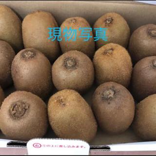 愛媛グリーンキウイ 1.3kg~1.4kg(フルーツ)