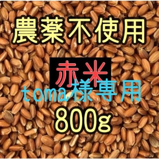 toma様専用  赤米・黒米・緑米 愛媛県産 各800g(米/穀物)