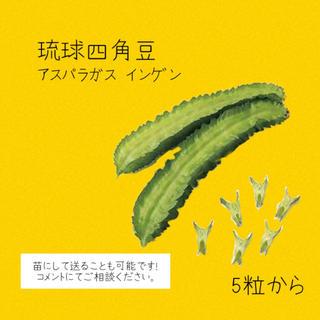 アスパラガスインゲン 琉球四角豆 種(野菜)