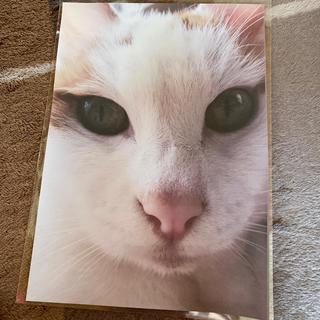 ねこちゃんカラーコピー(猫)