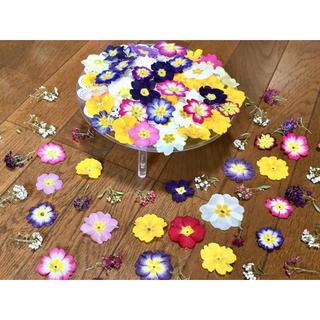 お花屋さんが作った春色プリムラ50冠➕アリッサム50冠の山盛り100冠です‼️(ドライフラワー)