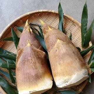 京都産 筍 3kg(野菜)
