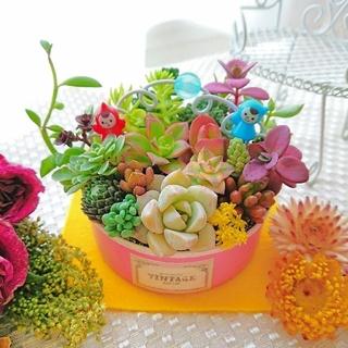 多肉植物 春の寄せ植え 小人達の多肉の森 ミニGARDEN◎ ピンクリメ鉢(その他)