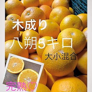 和歌山県産 木成り八朔5キロ 残り僅か 家庭用(フルーツ)