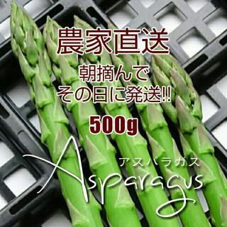 【農家直送】太 アスパラ 500g アスパラガス 新鮮野菜(野菜)