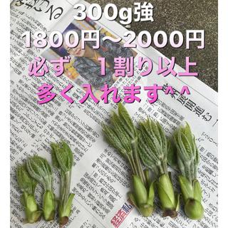 コシアブラ 良物と 普通サイズの違い 写真3は 極上品(野菜)