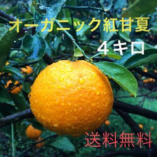 紅甘夏 4キロ オーガニック ノーワックス 有機JAS 広島県産 無農薬 瀬戸内(フルーツ)