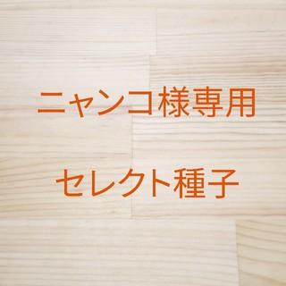 ニャンコ様専用 セレクト種子 2袋(野菜)