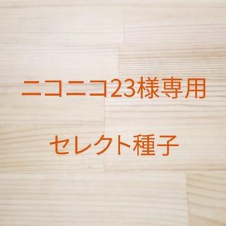 ニコニコ23様専用 B-20 赤茎ミズナ x 2 、B-35レッドケール x 1(野菜)
