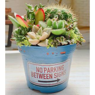 多肉植物 寄せ植え(その他)