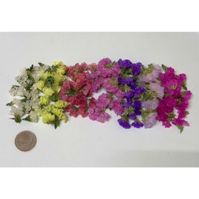 送料込350円 全7色スターチス  ハンドメイドのフラワー/ガーデン(ドライフラワー)の商品写真