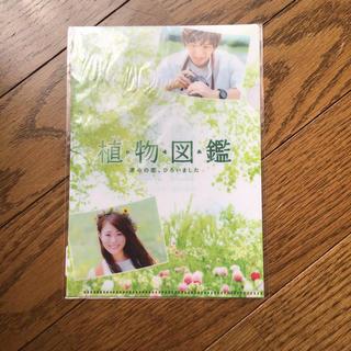 サンダイメジェイソウルブラザーズ(三代目 J Soul Brothers)の植物図鑑 ミニクリアファイル(クリアファイル)