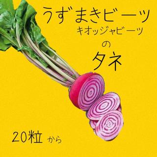 うずまきビーツ キオッジャ 種 10粒(野菜)