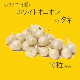 ホワイトオニオン 種 15粒(野菜)