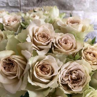 シックなカラー切り花品種❣̈挿木苗(その他)