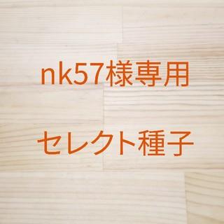 nk57様専用 セレクト種子 大豆もやし x 2袋、グリーンマッペ x 2袋(野菜)