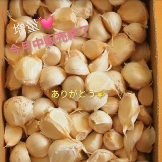 京都産🍀にんにくバラ♡無農薬栽培🍀115粒数以上増量💓お醤油漬けにも🧡(野菜)