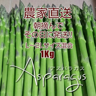 【農家直送】太 アスパラ 1kg アスパラガス 新鮮野菜(野菜)
