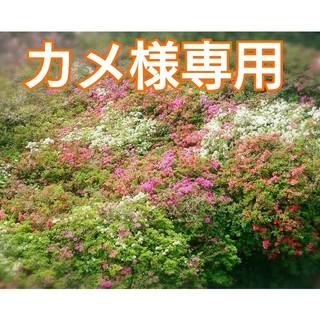 「カメ様様専用❗」無農薬新鮮野菜セット(M)  五島列島産(野菜)