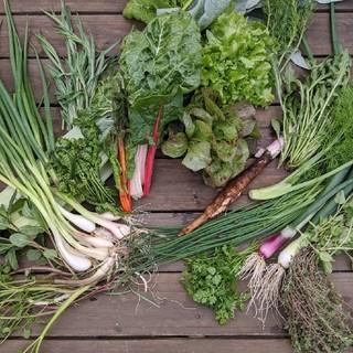 無農薬野菜 少量多品種畑よりfickle beat(野菜)