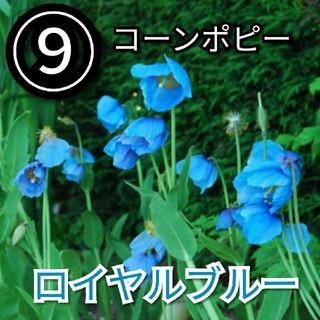 【ポピー⑨】コーンポピーロイヤルブルー 種子30粒(その他)