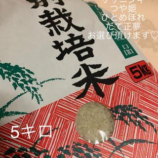 ♡大好評♡つや姫5キロ つやつや キラキラ もっちりをあなたへ❤️(米/穀物)