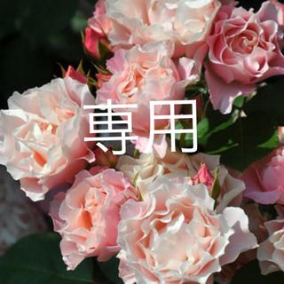 フリフリ❣̈薔薇挿木苗(その他)