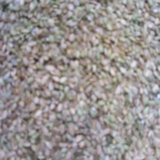 玄米 30Kg  良質 クズ米(米/穀物)