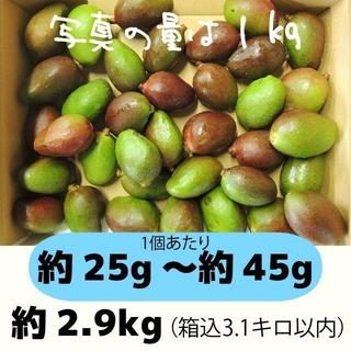 [青3-1]約2.9キロ グリーンマンゴー 青マンゴー 加工用 マンゴー(フルーツ)