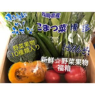 新鮮☆野菜果物☆福箱 10種類(野菜)
