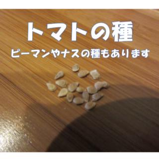 野菜の種 トマト ピーマン ナス 30粒 おまけつき(野菜)