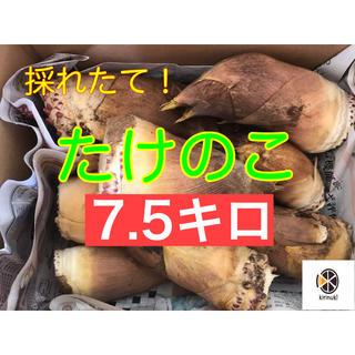 たけのこ7.5キロ  米ぬか付き!(野菜)