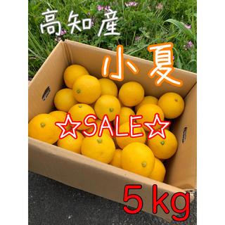 高知県 小夏 日向夏 ニューサマーオレンジ 5kg(フルーツ)