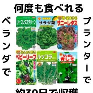 【すぐに何度でも収穫できる葉物系サラダ野菜の種6セット!】ベランダ、プランター(野菜)