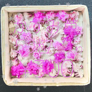 かすみ草 ドライフラワー ピンク&ホワイトmix 蕾入り(ドライフラワー)