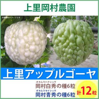 R2311【hs6ss6】上里岡村農園寅さんのアップルゴーヤのタネ12粒セット(野菜)