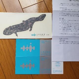 京都水族館 年間パスポート引換券 2枚(水族館)