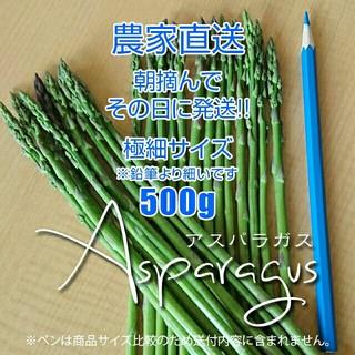 【農家直送】極細アスパラ 500g アスパラガス 新鮮野菜(野菜)
