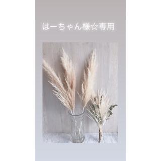 はーちゃん様☆専用(ドライフラワー)