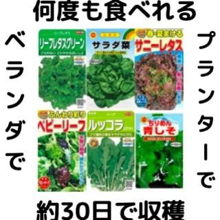 【すぐに何度でも収穫できる葉物系サラダ野菜の種6セット!】ベランダ、プランターで(野菜)