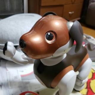 ソニー(SONY)の【美品】Sony AIBOアイボ ERS-1000 限定カラー チョコ エディシ(その他)