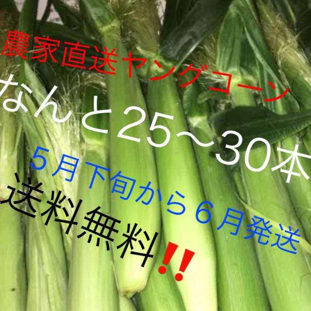 農家直送ヤングコーンなんと25〜30本5月下旬から6月発送予定‼️値下げ‼️ 食品/飲料/酒の食品(野菜)の商品写真