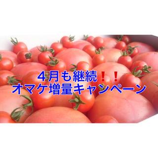 外出自粛応援❗️4月も継続❗️訳ありソムリエトマト5kg(16玉〜30玉)(野菜)